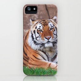 Fascinating Phenomenal Grown Tiger Chilling In Habitat Close Up Ultra HD iPhone Case