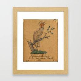 Plydolophus Leadbeaterider Dreifarbig Gehaubte Kakadu (Tri-Coloured Crested Cockatoo) Framed Art Print