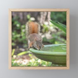 Baby Red Squirrel Drink of Water Framed Mini Art Print