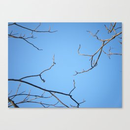 3 Branches Canvas Print