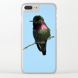 Male Anna's Hummingbird Clear iPhone Case