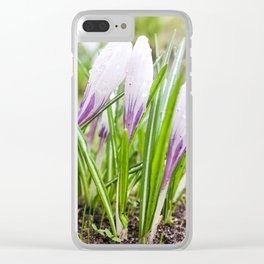 Wet flowers of crocuses. Clear iPhone Case