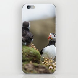 (RR 295) Puffins from Ireland iPhone Skin