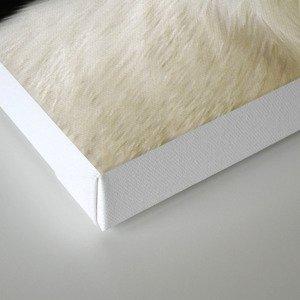 White Lion Canvas Print
