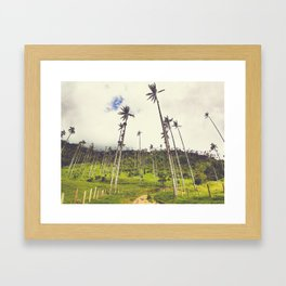 Wax Palms Tower over Cocora Valley Fine Art Print Framed Art Print