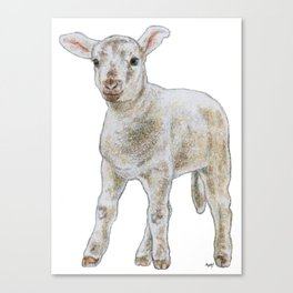 Quizzical lamb Canvas Print