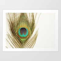 peacock feather Art Prints featuring Peacock Feather by Kimberly Blok