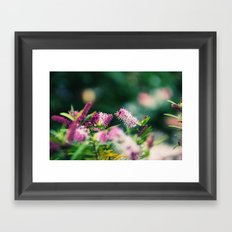 Summer Delight Framed Art Print