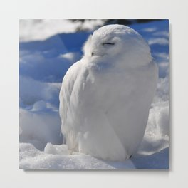 Snowy in the Snow by Teresa Thompson Metal Print