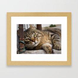 Soft Kitty Framed Art Print