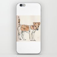 jack russell iPhone & iPod Skins featuring Jack Russell Terrier by Bryan James