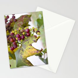 Green and purple grapes on the vine Stationery Cards
