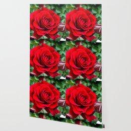 Rose revolution Wallpaper