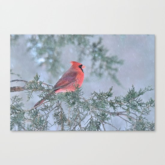 Sleet Cardinal Canvas Print