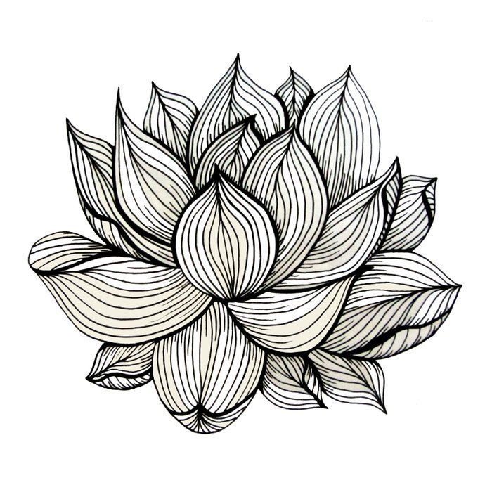 Lotus Flower, Black and white, Nature, Organic design, drawing ...