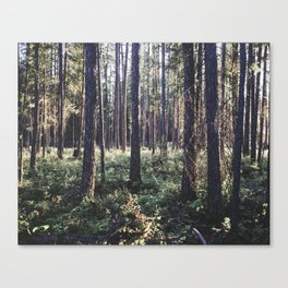 Pine Forest in Sunlight Canvas Print