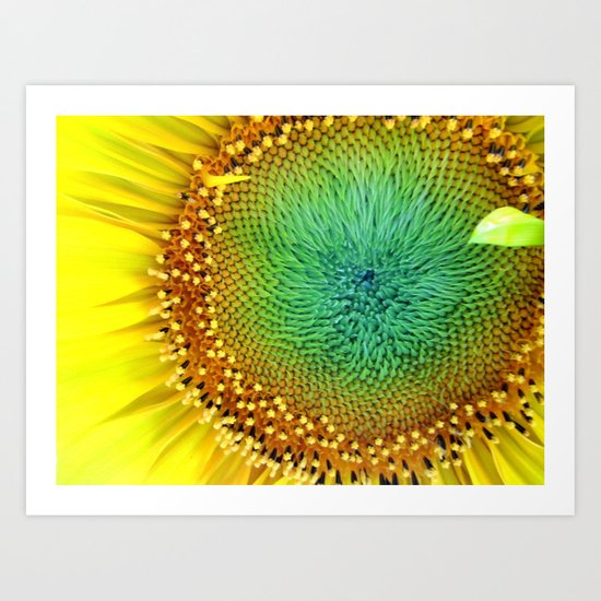 Sunflower from Seed Art Print