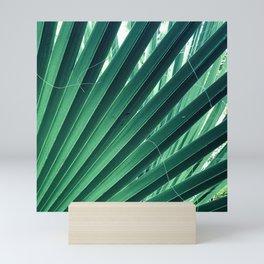 Scandalous Fan Palm Leaf Fine Art Macro Photo Mini Art Print