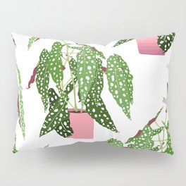Simple Potted Polka Dot Begonia Plants in White Pillow Sham
