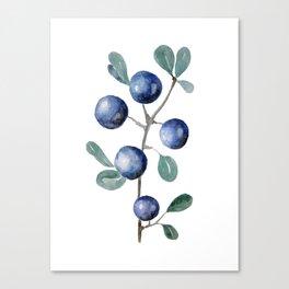 Blackthorn Blue Berries Canvas Print