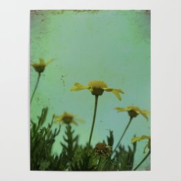 Fragile Flowers Poster