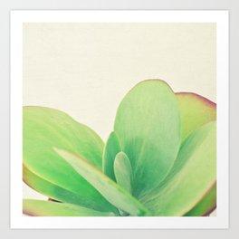 Paddle Plant Art Print