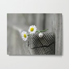 Daisies on wood Metal Print