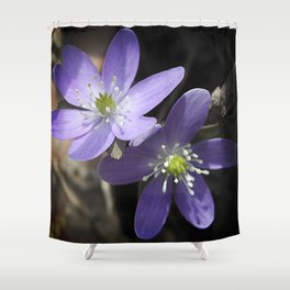 Woodland hepatica, Anemone acutiloba - a sure sign of spring Shower Curtain