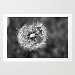 Dandelion & Autumn Art Print