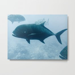 Fish 02 Metal Print