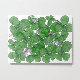 Succulents Jade Plant Metal Print