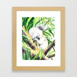 Sleepy baby koala Framed Art Print