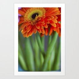 Macro photograph of orange gerbera daisies in a vase. Art Print