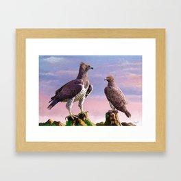 Martial Eagle Framed Art Print