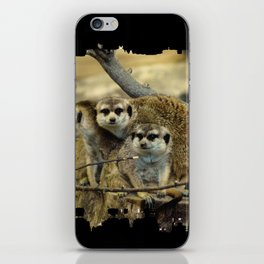 African Meerkat Trio iPhone Skin