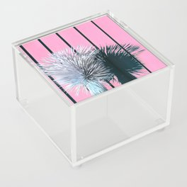 Yucca Plant in Front of Striped Pink Wall Acrylic Box