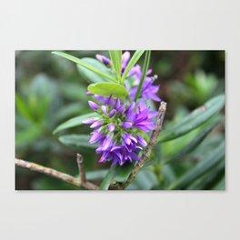 Purple Paradise Canvas Print