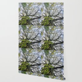 Centenary oak with the trunk covered in moss and green plants Wallpaper
