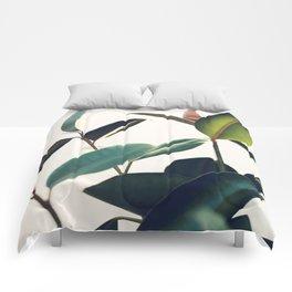 Ficus Elastica #8 Comforters