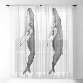 North Atlantic Humpback whale Sheer Curtain