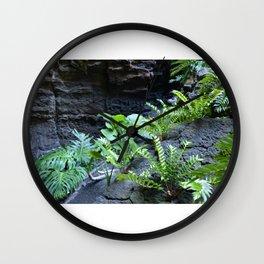 Green ferns growing on lava Wall Clock