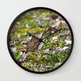 Hermit Thrush Wall Clock