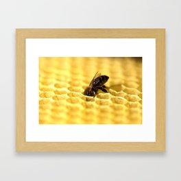 Licking bee Framed Art Print