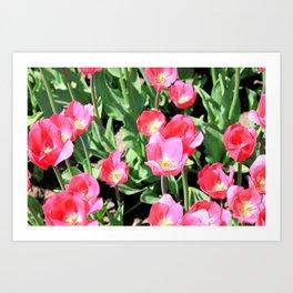 Pink Tulips II  Art Print