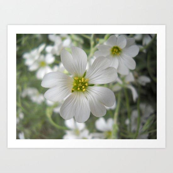 Spring. White Flowers. Art Print