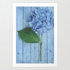 Powder Blue Hydrangea Art Print