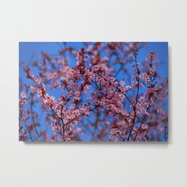 Spring is coming! III Metal Print