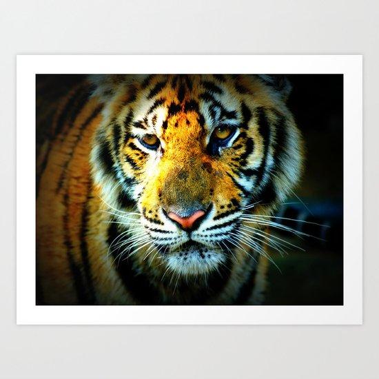 Thai Tiger  Art Print