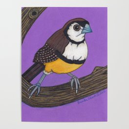 Owl Finch on Branch with Purple Sky, colored pencil, 2010 Poster