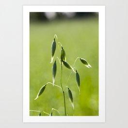 one ear of oats Art Print